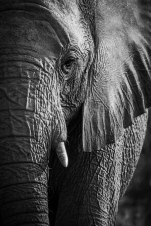 Jonathan Bond, elephant, wildlife, safari, Africa, South Africa, portrait