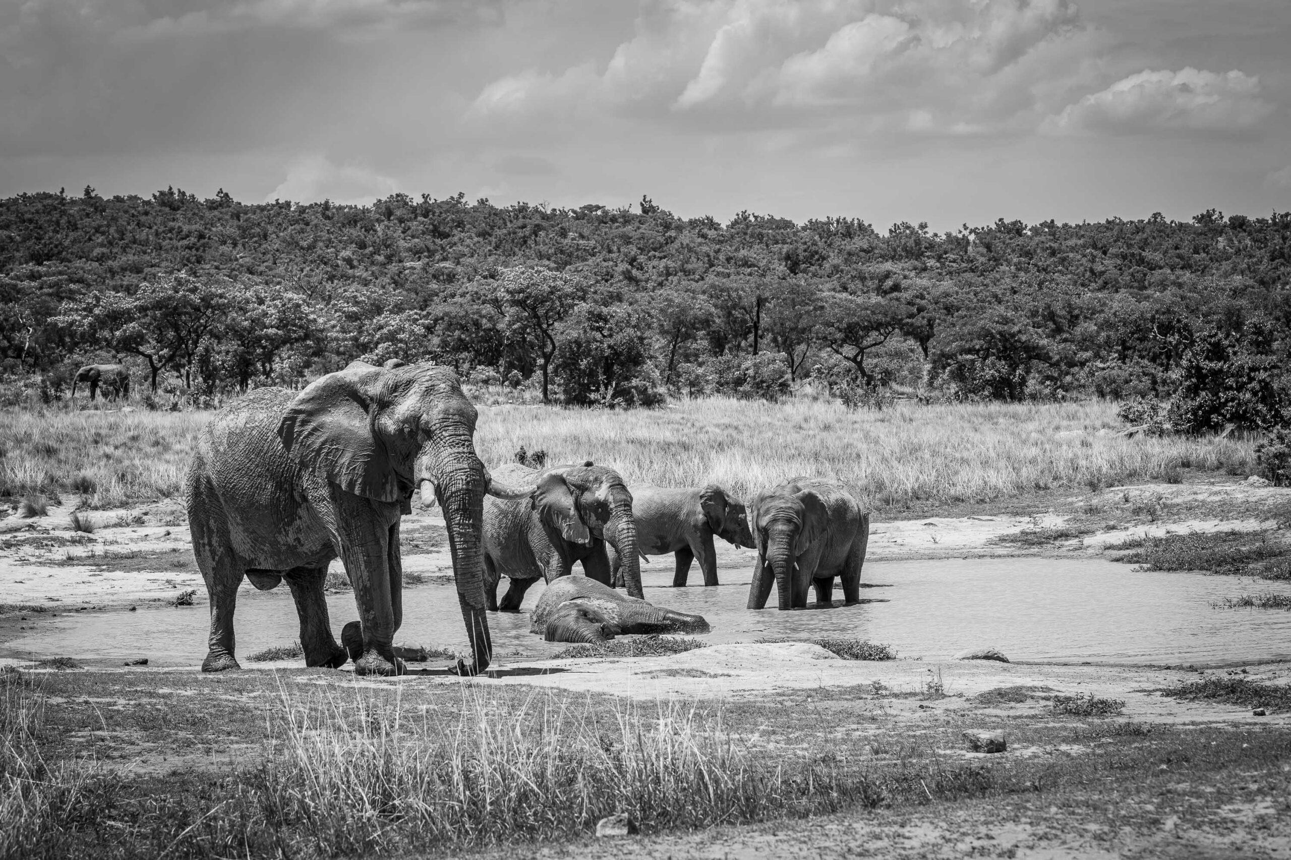 http://ElephantsWateringHole