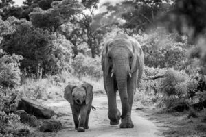 mother and baby elephant walking on a road
