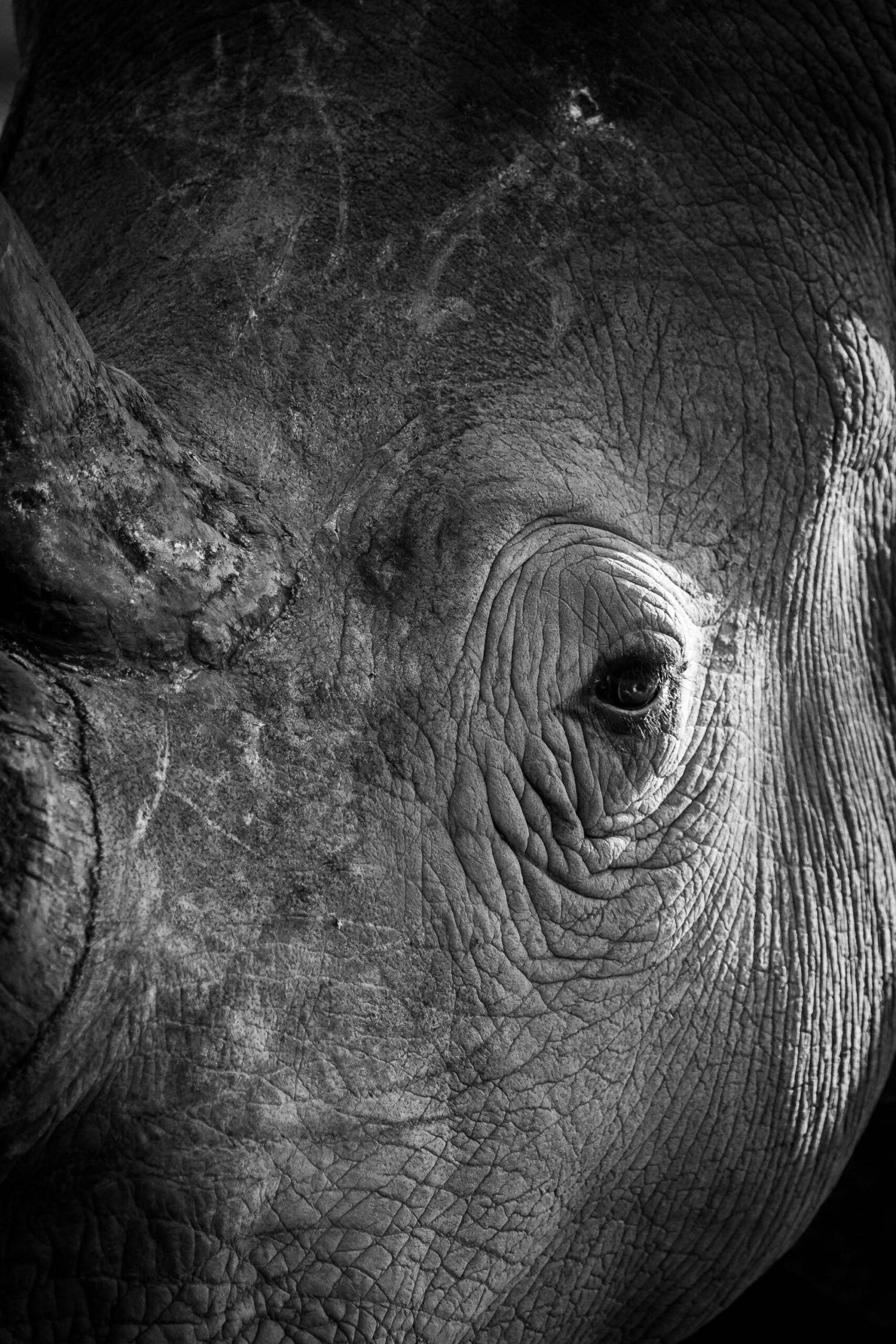 http://RhinoPortrait