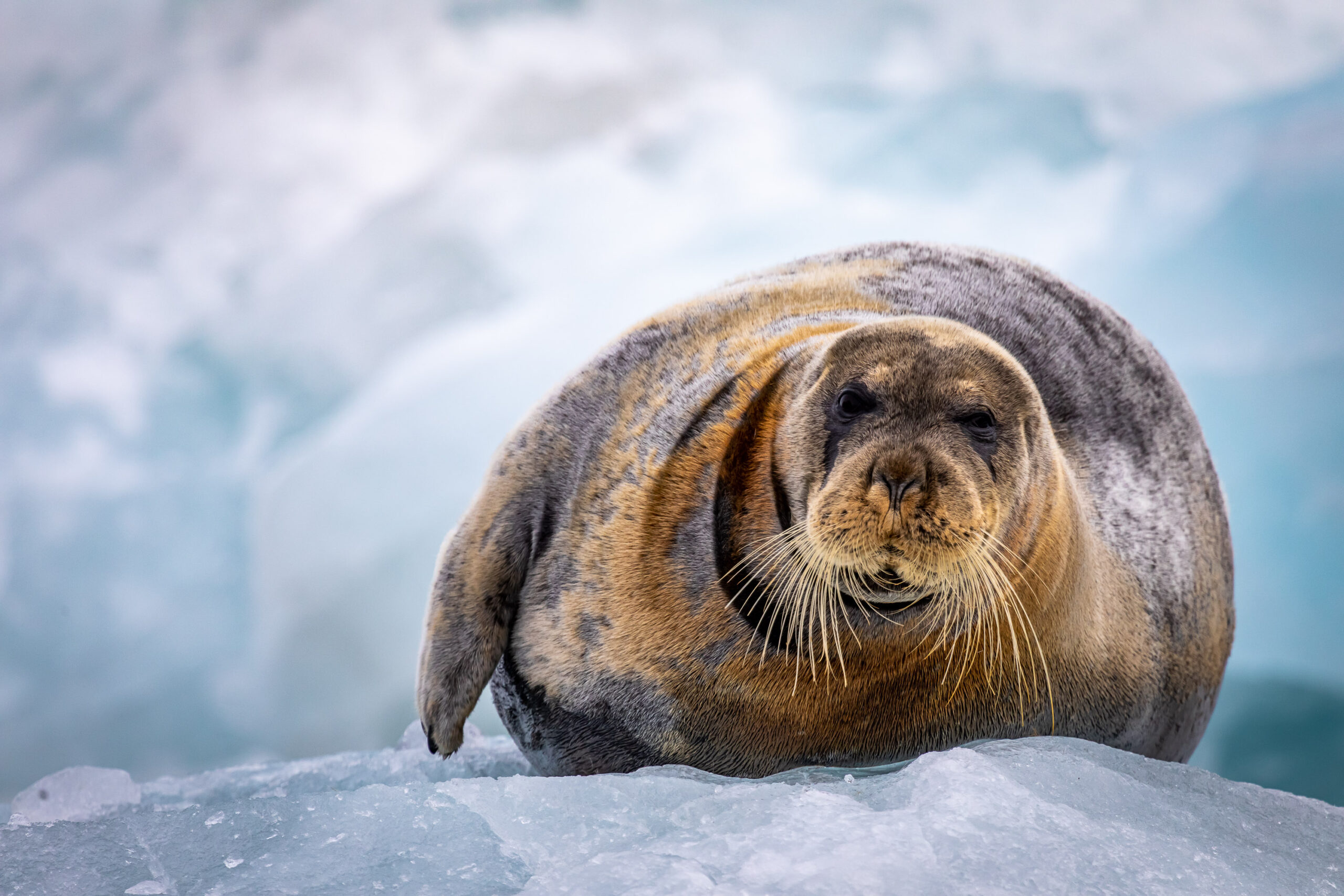 http://Seal%20on%20Ice